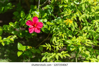 View of the red flower, Moalboal, Cebu, Philippines. With selective focus