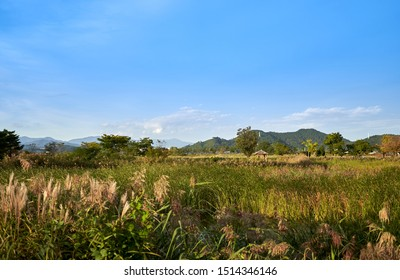 A view of reed beds and a hut at the Suncheonman Bay Wetland Reserve in South Korea.