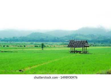 View of rice farm in rural city