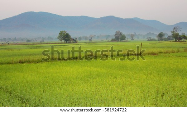 View of rice field with mountain background. Green rice field in the northern of Thailand.