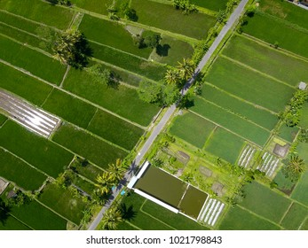 View of rice fields area by aerial