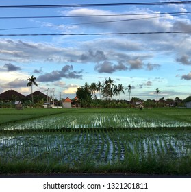 View of a rice paddy from the road in Bali