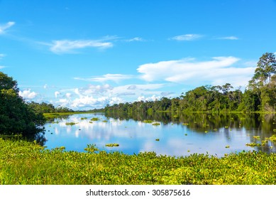 View of a river in the Amazon rain forest with aquatic plants in the foreground near Iquitos, Peru
