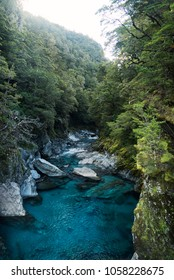 View of river of deep, clear, blue, fresh water in river running through exotic forest. Blue Pools in Mount Aspiring National Park in  Wanaka, New Zealand.