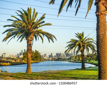 View of riverbank in Footscray Park along the beautiful Maribyrnong River of Melbourne. Palm trees growing along riverbank with city buildings in distance.