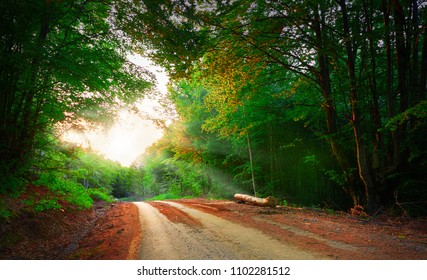 A view of road deep in the forest with sunbeams thru the branches. Sceniv view.