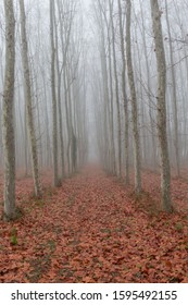view of a road with dry fallen leaves around trees under a thick fog
