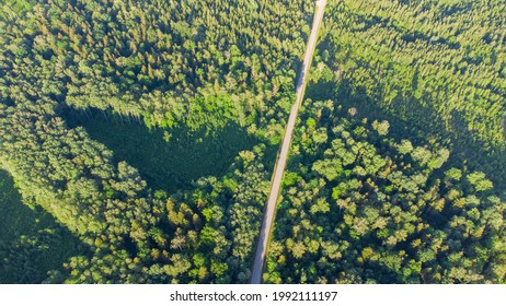 View of a road through the forest at the sunset