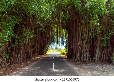 View of the road through the trees and creepers, Aitutaki Island, Cook Islands. Copy space for text