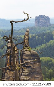 View of rock formations with a dry tree on background, National park Saxony Switzerland