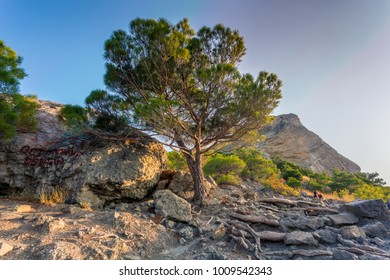 "View of rocks, south pine and ""warning rockfall"" brown inscription in front, sparse forest, sitting girl and mountain top in distance lit with low sun light under clean blue sky at sunrise in Crimea"