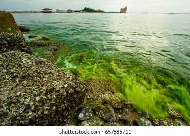View from the rocky shoreline overlooking the sea in green. Plankton bloom,Algae Bloom change A sea to be green.