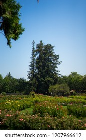 view in Rose Gardens