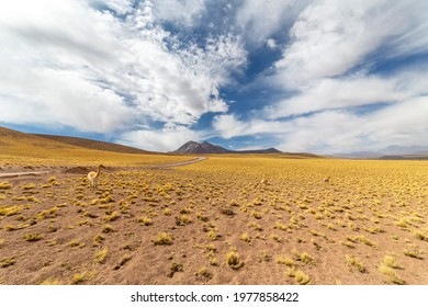 View from the Route 23, the scenic road in the north ofChile, running fromCalamatoSico Pass, the border with Argentina. The road passes near Miscanti Lagoon, Salar de Talar and Tuyajto Lagoon