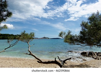 View at Rovinj from the beach through pine trees