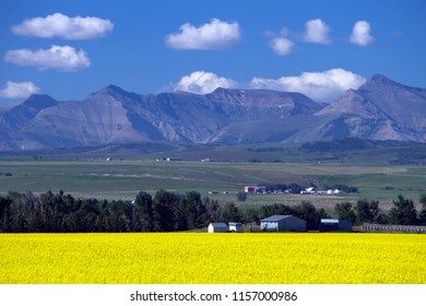 View of rural Alberta and a yellow canola field in bloom with the Canadian Rockies in the background near the prairie town of Pincher Creek, Alberta, Canada.