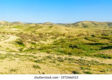 View of rural landscape of the Yatir region. Southern Israel