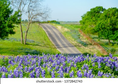 View of rural road with bluebonnet wildflowers along countryside near the Texas Hill Country during spring