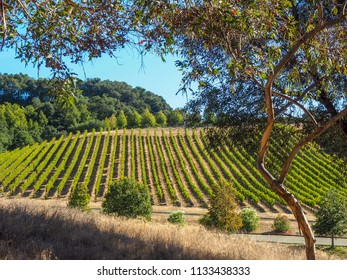 View of Russian River Valley vineyards