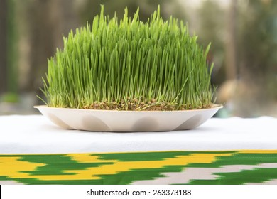 View of Sabzeh - sprouted wheat germ symbolized rebirth for Nowruz celebration