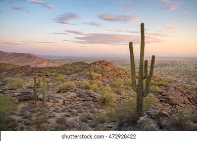 View of  Saguaro cactus and downtown Phoenix Arizona at sunrise