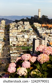 View of San Francisco from Lombard street, Coint tower in background, San Francisco, United States