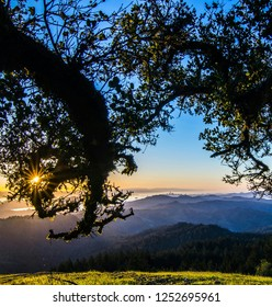 View of San Francisco through oak trees from Mt. Tam at sunrise.