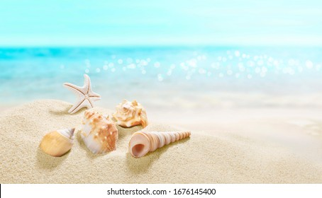 View of the sandy beach. Summer day. Shells in the sand.