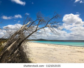 View of sandy beach at Two peoples Bay conservation reserve with dried coastal tree reaching out the sea in Nanarup, Albany, Western Australia.