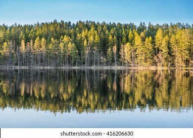VIEW OF A SCANDINAVIAN PINE AND BIRCH FOREST AND LAKE WITH WARM EVENING LIGHT