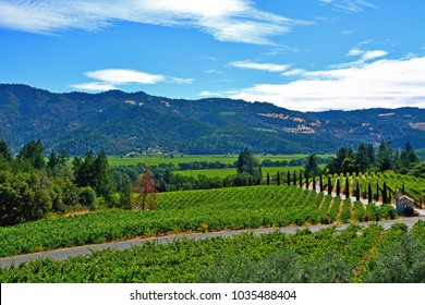 View of scenic Napa Valley in California
