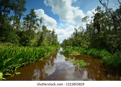 View of scenic Sekonyer River with sky reflections on the water, Tanjung Puting National Park, Borneo, Kalimantan, Indonesia