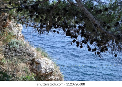 View of the sea with pine tree