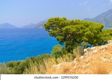 View of the sea through a green pine on a cliff, Turkey, In front are yellow stones and dry grass, green pine with a flat crown, the background is a blue sea