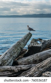 A view of a seagull along the shore at Saltwater State Park in Des Moines, Washington.