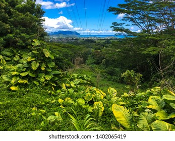 View seen of the east side of Oahu, Hawaii, the oceans, lush green tropical forest, island, Kailua, from hiking on the Old Pali road with tropical large leaved plants in the foreground.