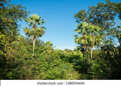A view of the Sertao landscape, a semiarid region in the Caatinga biome - Oeiras, Piaui state, Brazil