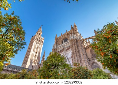 View of Seville Cathedral of Saint Mary of the See (Seville Cathedral)  with Giralda tower and oranges trees in the foreground