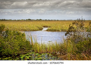 View of the Shark River Slough of the northern Everglades adjacent to the Tamiami Trail in the Francis S. Taylor Wildlife Management Area. A slough is slow moving body of water.