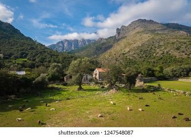 View of a sheep farm in a Tavignano River valley in the vicinity of Corte, Corsica, France