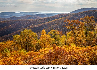 View of Shenandoah National Park and the Blue Ridge Mountains from the park's famous Skyline Drive Buck Hollow Overlook.