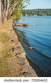 A view of the shoreline at Seward Park in Seattle, Washington. Mercer Island can be seen in the distance.