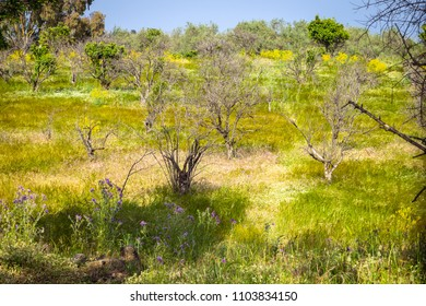 view of Sicilian uncultivated countryside with bright yellow and green tones