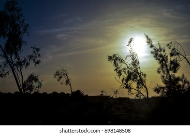 view of silhouette trees during sunset time and clouds appears on the background