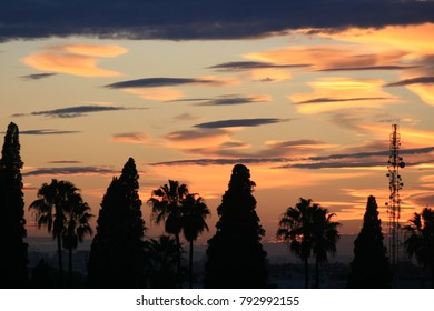 View of silhouettes trees aligned with a colorful sky background. Pink, grey, blue and purple colors compose this natural pattern. Picture taken in the evening on spring in Tunisia. Beautiful image.