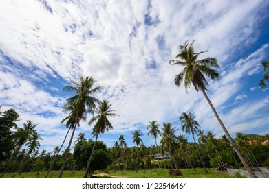 View Sky and Plamtree in thailand