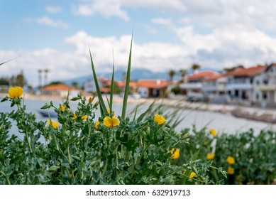 View at Small coastal Iskele village with yellow flowers
