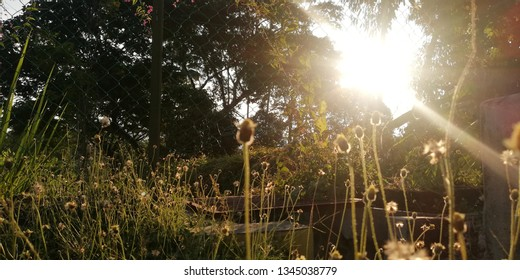 view small flowers over sunny light