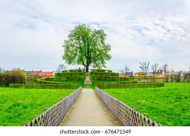 View of a small hill situated in the Kvetna zahrada garden in Kromeriz with a tree in the center.