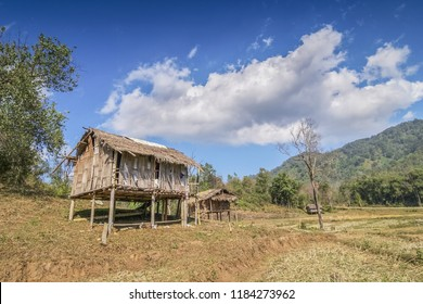 view of a small hut in rice field with blue sky background, Doi Lang, Mae Ai, Chiangmai, Thailand. Doi Lang rice fields is the highest plantation area of Thailand.